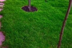 Ландшафтный дизайн Рулонный газон Устройство газона Автополив Автоматический полив Водоем Пруды Фонтаны Благоустройство Озеленение Зи мние посадки Ижевск (189)