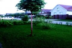 Ландшафтный-дизайн--Рулонный-газон-Устройство-газона-Автополив-Автоматический-полив-Водоем-Пруды-Фонтаны-Благоустройство-Озеленение-Зимние-посадки-Ижевск-00016